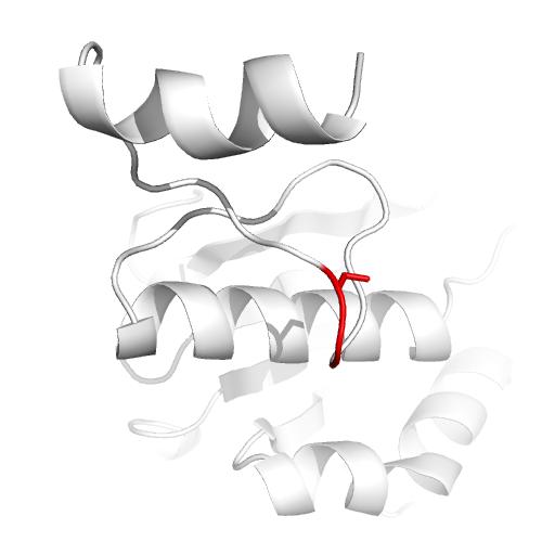 17, hydroxysteroid dehydrogenase - Wikipedia